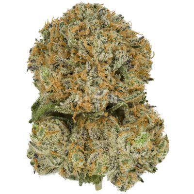 Buy Blue Gelato 41 Online Canada Green Society