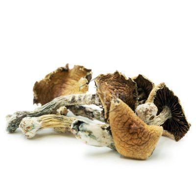 Buy Magic Mushrooms Online Canada Green Society