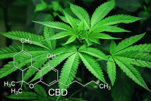 Marijuana, Leaves, Cannabis, Green